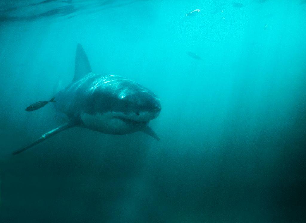 Sharks can tweet