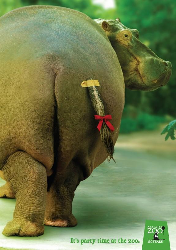 72189_Zoo_Hippo